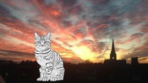 cat and cathedral1a